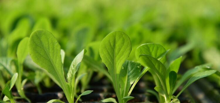 ทำเกษตรอินทรีย์ ด้วยความรู้และเชื่อมั่น