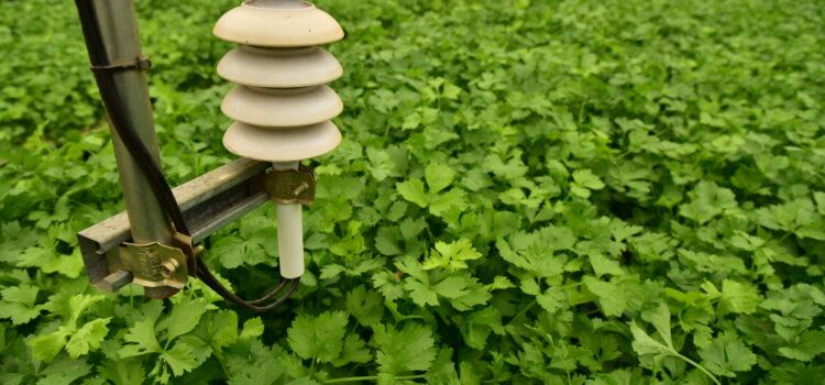รู้จักและรู้ใช้ IoT …ก้าวสำคัญของเกษตรกรไทย