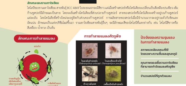 เมตาไรเซียม: ราเขียวกำจัดแมลงศัตรูพืช