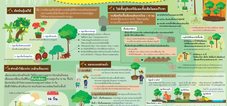 ปลูกป่าอย่างไรให้ได้ป่า