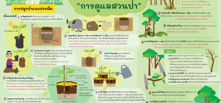 ปลูกป่าแบบประณีตและการดูแลสวนป่า