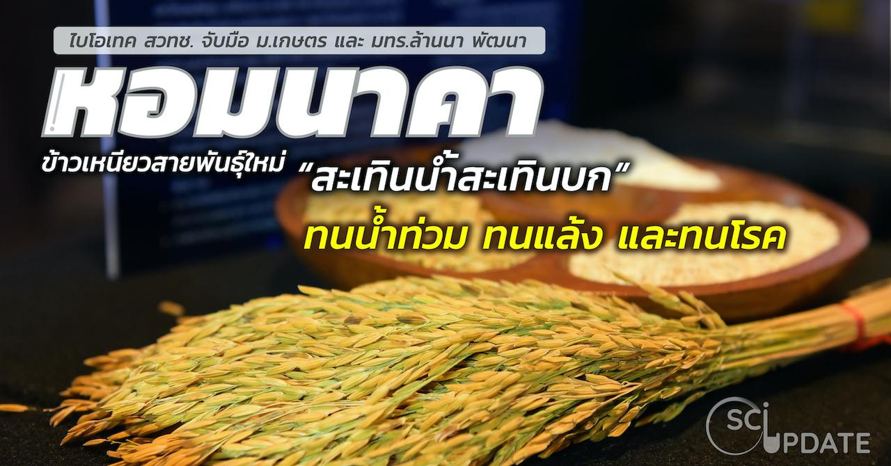 SCI UPDATE: 'ข้าวหอมนาคา' ข้าวเหนียวสะเทินน้ำสะเทินบก สายพันธุ์แรกของไทย
