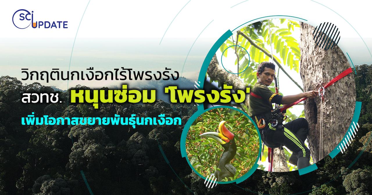 COVER SCI UPDATE : วิกฤตินกเงือกไร้โพรงรัง สวทช. หนุนซ่อม หวังเพิ่มโอกาสขยายพันธุ์นกเงือก