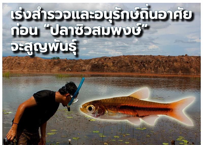 """เร่งสำรวจและอนุรักษ์ถิ่นอาศัย ก่อน """"ปลาซิวสมพงษ์"""" จะสูญพันธุ์"""