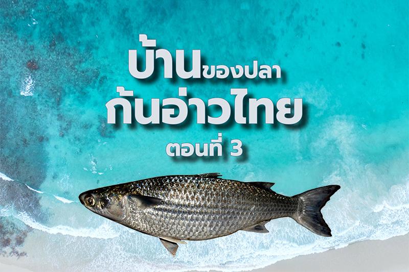 บ้านของปลาก้นอ่าวไทย ตอนที่ 3: ทะเลเหนื่อย แต่ไม่เคยร้าง และพร้อมฟื้นคืน