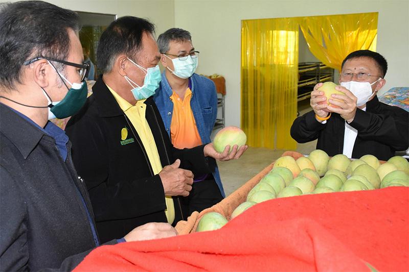 เยี่ยมชมโครงการไอแทป สวทช. นำเทคโนโลยีพัฒนาห้องบ่มผลไม้ ให้วิสาหกิจผู้ส่งออกมะม่วง จ.ราชบุรี